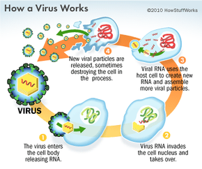 How a Virus Works