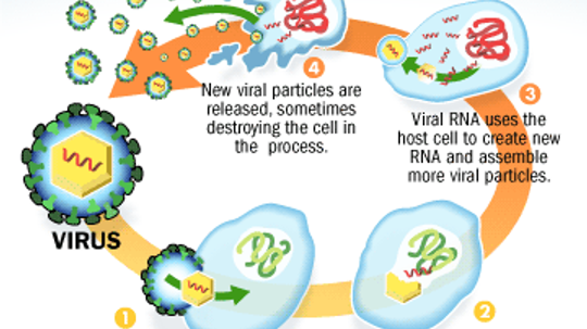 What is a virus, and how does it become a danger to human life?