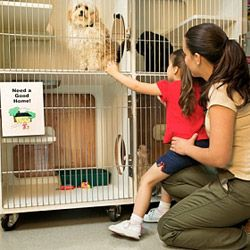 A visit to an animal shelter can teach kids the responsibilities that come with caring for a pet.