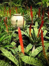 The Vriesea splendens bromeliad. See more pictures of bromeliads.