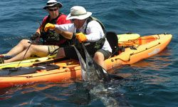 Who needs a boat when you can reel in a marlin from the safety and comfort of your kayak?