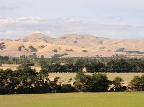 The Wairarapa wine region of New Zealand enjoys a thriving tourist trade. See more wine pictures.