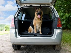 This lucky dog gets to come along on a road trip. He should be in a pet seat with a restraint, however.