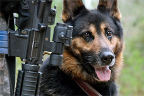 Rexo and many other military working dogs have a long and storied history in warfare. See more dog pictures.