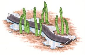 Leaky-pipe, or soaker-hose, irrigation lets water slowly permeate the soil.