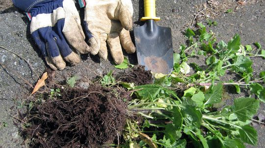 Natural Weed Killers Make Gardening Safe and Easy