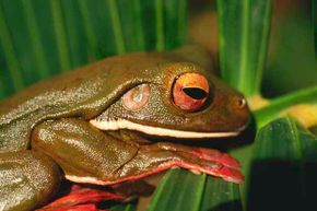 Researchers have identified more than 100 potential bacteria-killing substances from 6,000 frog species.