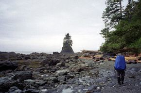 The West Coast Trail takes about one week to hike and is considered one of the world's most scenic trails. See more national park pictures.