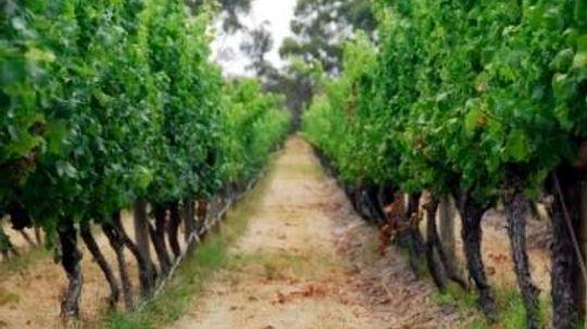 Ultimate Guide to Western Australian Wine Regions
