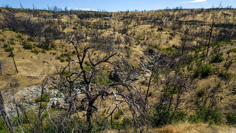 burn scar from the Carr Fire