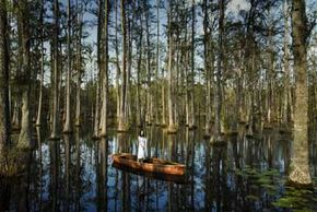 Cypress trees are common to wetlands, like these in a Charleston, S.C. swamp.