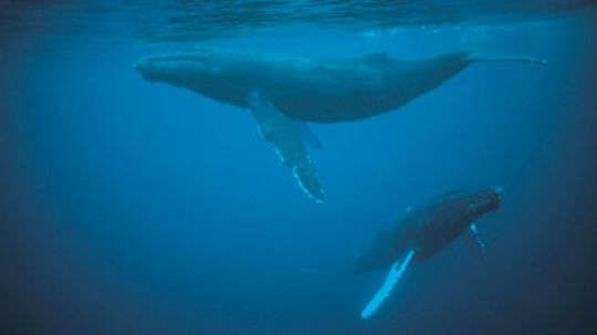 Do whales and dolphins sleep?