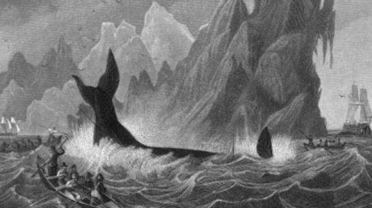How Whaling Works