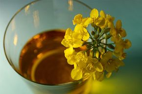 You'll find canola oil in most well-stocked kitchens. This oil is idea for cooking and baking.