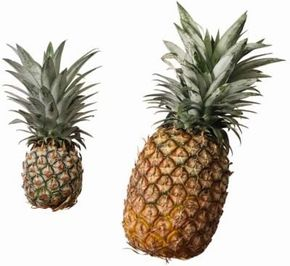 Fruit Image Gallery Pineapples should smell aromatic and sweet in the supermarket. See more fruit pictures.