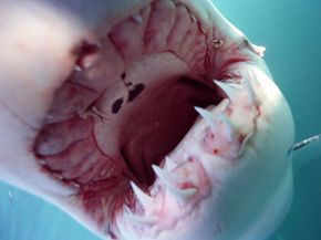 This is one of the more obvious dangers of swimming with sea creatures.
