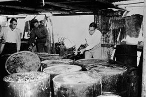 Barrels of illegal moonshine liquor being destroyed by American Revenue agents in Florida.