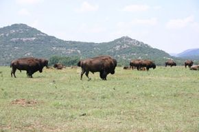 You'll never know what you'll see during a hike through the Wichita Mountains.