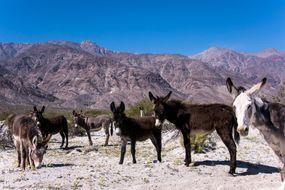burro, donkey, american west, desert