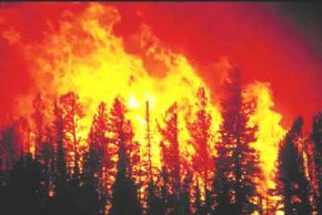 Wildfires can produce winds that are 10 times stronger than the winds surrounding them.