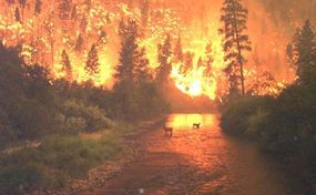 In 2000, this wildfire burned just north of Sula, Montana.