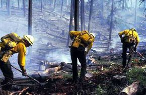 Firefighters build firebreaks like this one to remove potential fuel from a wildfire's path.