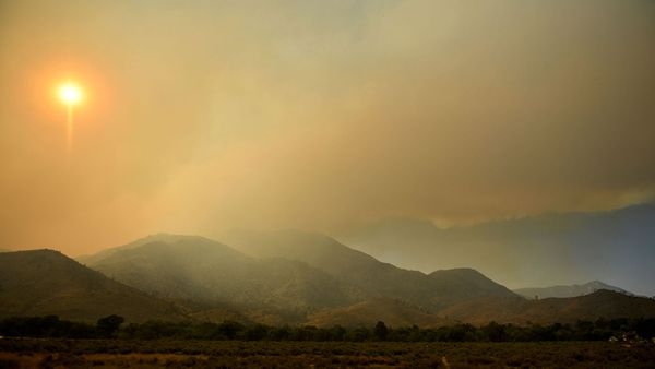 Wildfire Smoke Is Affecting Photosynthesis. Here's How