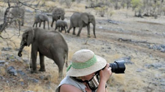 What is the best wildlife photography equipment?