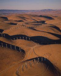 Birds beware? The controversial wind farm in Altamont, California.