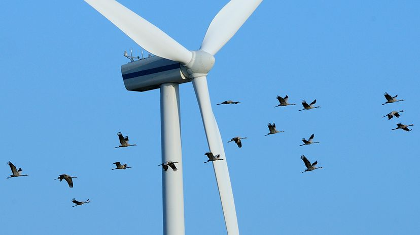 A flock of Eurasian crane (Grus grus) flies close to a wind turbine in Germany. Nick Upton/Nature Picture Library/Getty Images