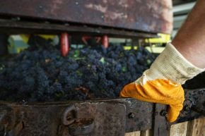 The waste from pressed grapes can actually be converted into biofuel.