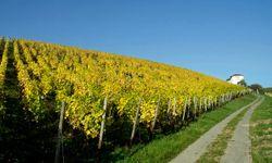 Winery in Rheingau, Germany