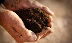 Start up a compost pile before winter arrives.