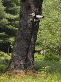 Wireless surveillance camera fighting crime in the forest?
