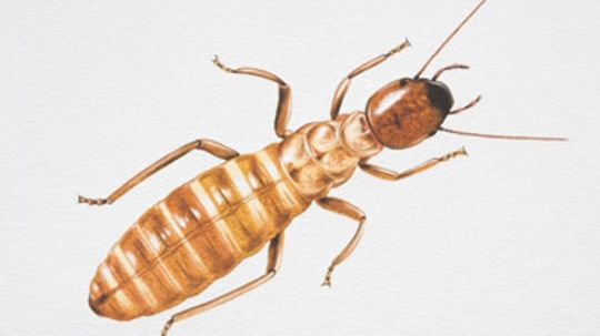 Wood & Termite Damage