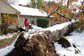 Emmanuel S. Tsitsilianos looks at the tree that was uprooted by the nor'easter on Oct. 31, 2011 in Worcester, Mass. The tree fell into his driveway, destroying two cars, and damaging his roof.