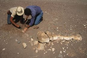 Although significant, the mass extinction that killed off the dinosaurs is not the biggest one in history. Here, paleontologists dig up the remnants of a distant past.