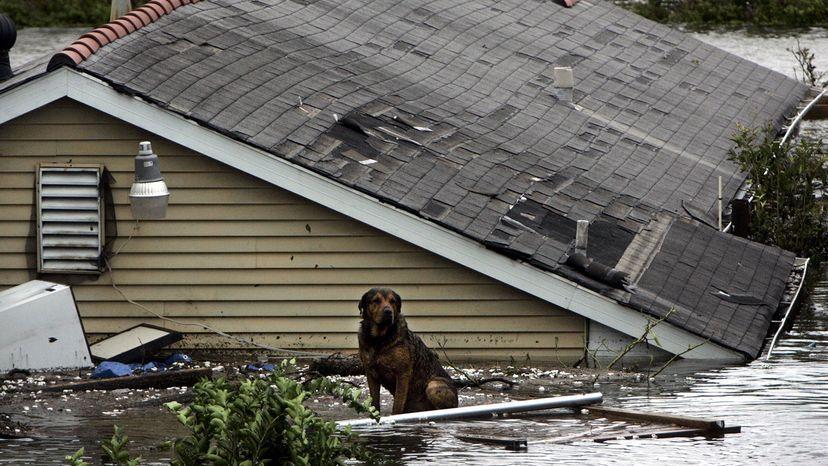 dog, hurricane Katrina