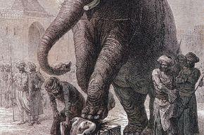 elephant execution