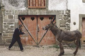 Mules aren't stubborn; they're just too smart to let their owners overwork them.