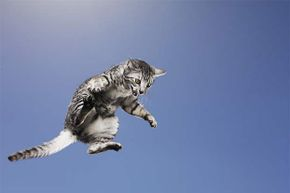 Cats don't always land on their feet, so don't let your kids toss them to prove a point.