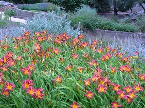 On top of reducing outdoor water use by 60 percent or more, a properly Xeriscaped lawn can increase the property value of a home by 15 percent.