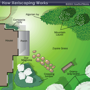 A potential plan for a Xeriscaping project.