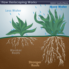 With less water, the roots of a plant will become weaker and lose their hold of the soil.