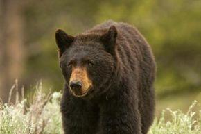 Beware of the Bear.