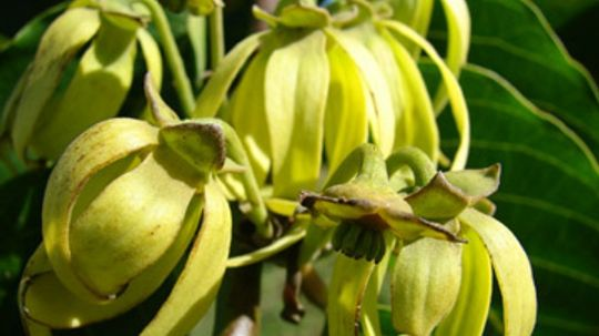 How does ylang-ylang work in skin cleansers?