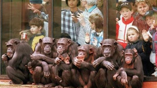 Are zoos good or bad for animals?