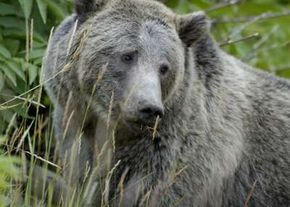 Bear cubs may look cute and cuddly, but mama is usually nearby so stay away from the little ones.