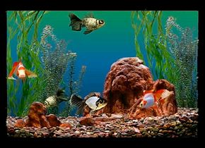 The compatibility of the different kinds of fish in your aquarium is vital to their survival. See more aquarium pictures.