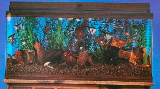 Aquarium Basics